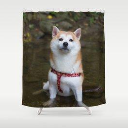KUMA: Shiba In River 1 Shower Curtain