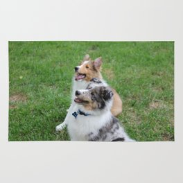 Sheltie Puppies Rug