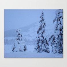 Snow Laden Evergreen Trees Canvas Print