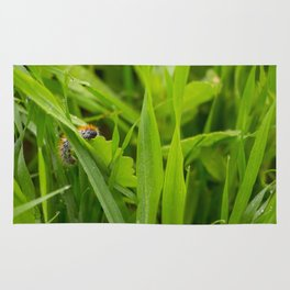 Caterpillar Macro Rug