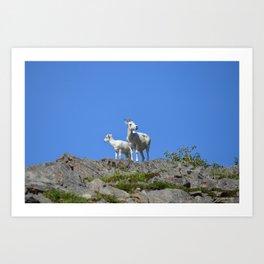 Ewe and Lamb Dall Sheep Art Print