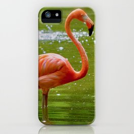 Florida Flamingo iPhone Case