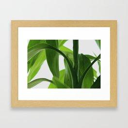 Bamboo Butterly Framed Art Print