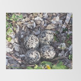 Killdeer eggs in nest Throw Blanket