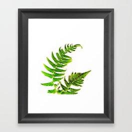Fern on white Framed Art Print