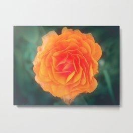 Orange Blossom Metal Print