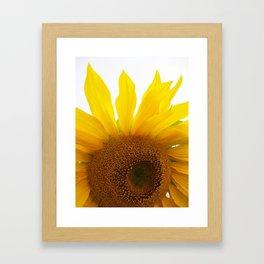 My Mother's Sunflowers Framed Art Print