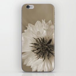 Chrysanthemum iPhone Skin