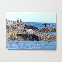 Seals resting on the Rocks Metal Print