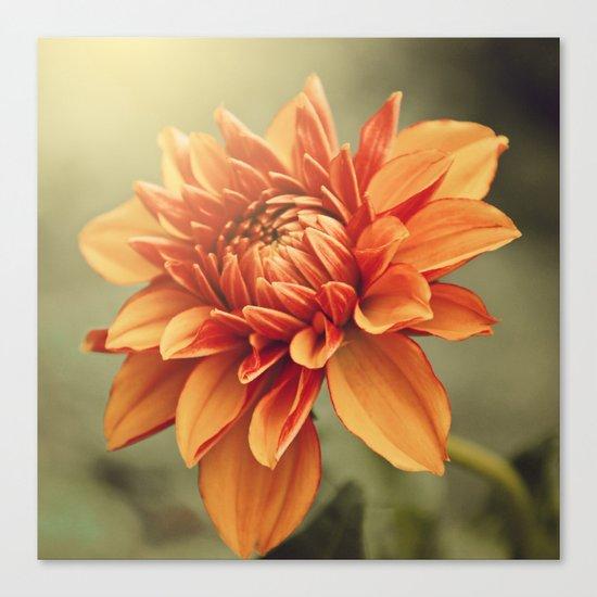 Orange Dahlia #2 * Garden Flowers Floral Blossom Nature Canvas Print