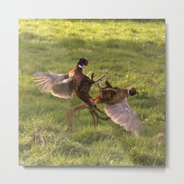 Fighting pheasants Metal Print