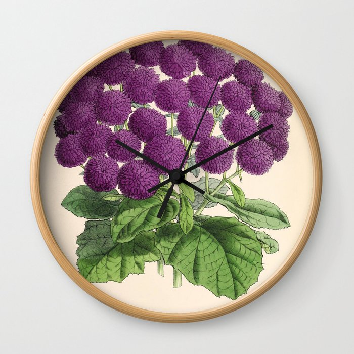 Double Cineraria Original hand-coloured print drawn and lithographed by Fitch Wall Clock