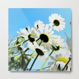 Watercolor Flower, Daisy 01, Hovs Hallar, Sweden, Cheerful Faces Metal Print