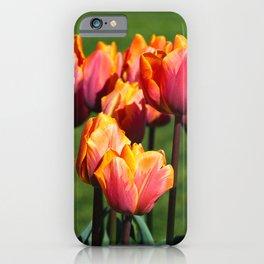 Beautiful tulips, variety Hermitage iPhone Case