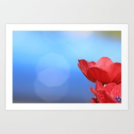 Red beauties with blue background Art Print