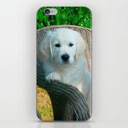White Golden Retriever Dogs Sitting in Fiber Chair iPhone Skin