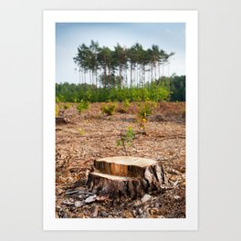 Woods logging one stump after deforestation Art Print