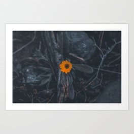 Little aesthetic yellow flower Art Print