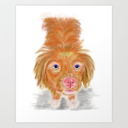 Jackson The Nova Scotia Duck Tolling Retriever Art Print