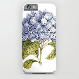 Hydrangea hortensia species diversity Korea garden decoration plant iPhone Case