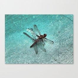 D-Fly Grunge Canvas Print