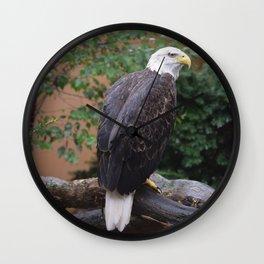 National Aviary - Pittsburgh - Bald Eagle 5 Wall Clock