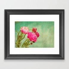 Ranunculus in Spring Framed Art Print