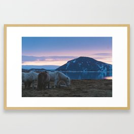 Icelandic Horses and Sunsets Framed Art Print