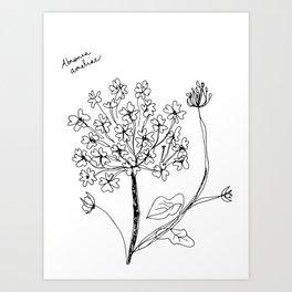 Abronia ameliae Art Print