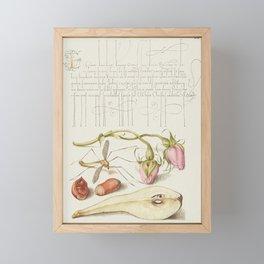 French Rose Crane Fly European Filbert and Common Pear from Mira Calligraphiae Monumenta or The Mode Framed Mini Art Print