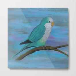 Cuddly blue quaker parrot Metal Print