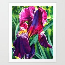 The Queen's Iris Art Print