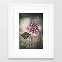 hydrangea Framed Art Prints featuring Hydrangea  by Maria Heyens