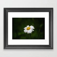 daisy in the rain Framed Art Print