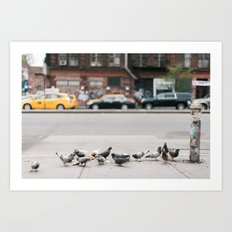 Pigeons and Yellow Cabs in New York City Art Print