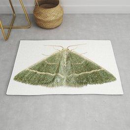 green moth chlorissa etruscaria Rug