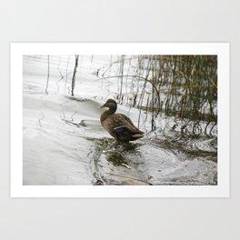Grey duck on dark the lake Art Print