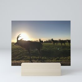 Roan Antelope Sunset Mini Art Print