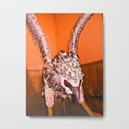 EAGLE ARPIA Metal Print