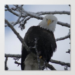 Bald Eagle at 12 Below -- Soldotna, Alaska Canvas Print