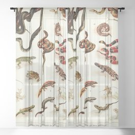 Adolphe Millot - Batraciens et reptiles - French vintage zoology poster Sheer Curtain