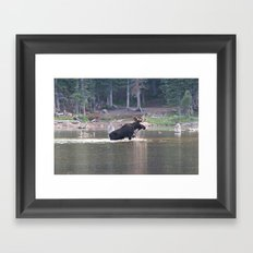 Majestic Moose Framed Art Print