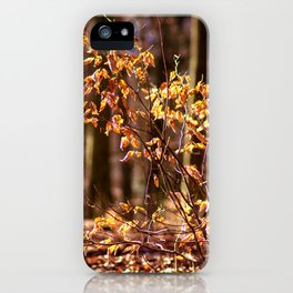 Golden leaves in February iPhone Case