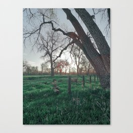 Unsaturated Life Canvas Print