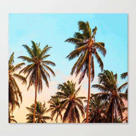 Palms trees. Canvas Print