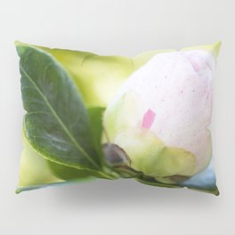Strawberry Blonde Camellia from Bud to Bloom Pillow Sham