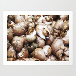 texture of sea snails Art Print