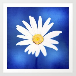Royal Blue Yellow White Daisy Flower Photography, Bright Colorful Nature Photo Art Print