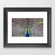 Peacock Fan Framed Art Print