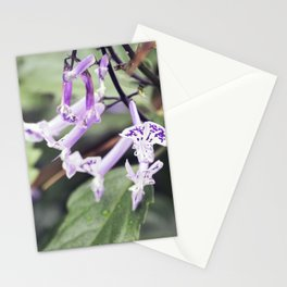 Longwood Gardens Autumn Series 244 Stationery Cards